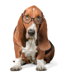 Basset Hound PNG Free Download PNG Clip art