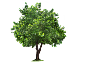 Beautiful Tree PNG PNG Clip art