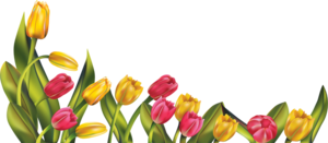 Beautiful Tulip PNG PNG Clip art
