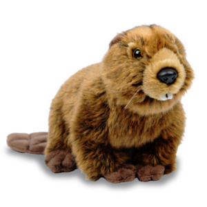Beaver PNG HD PNG Clip art