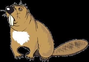 Beaver Transparent Background PNG Clip art