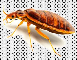 Bed Bug Background PNG PNG Clip art