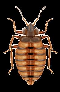 Bed Bug PNG Transparent Image PNG Clip art