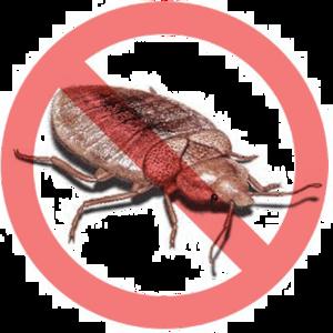 Bed Bug Transparent Images PNG PNG Clip art
