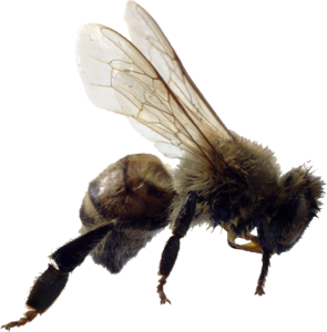 Bee PNG File PNG Clip art