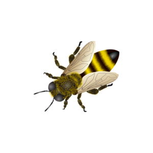 Bee PNG Free Download PNG Clip art