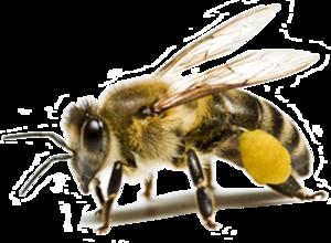 Bee PNG HD PNG Clip art