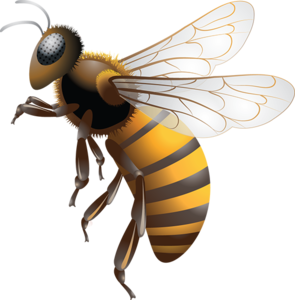 Bee PNG Photo PNG Clip art
