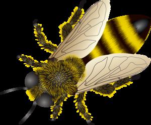 Bee PNG Photos PNG Clip art