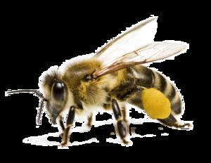 Bee PNG Transparent Image PNG Clip art