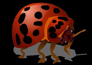 Beetle Bug PNG PNG Clip art