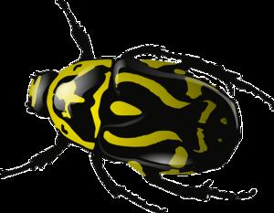 Beetle Clip Art Free PNG PNG Clip art