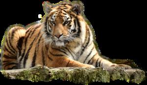 Bengal Tiger PNG Image PNG Clip art