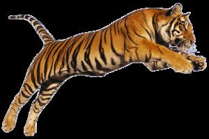 Bengal Tiger PNG Photo PNG image