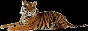 Bengal Tiger PNG Transparent Image PNG Clip art