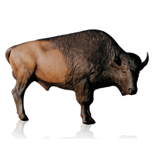 Bison PNG Clipart PNG Clip art