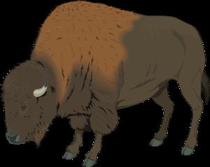 Bison PNG Transparent Image PNG Clip art