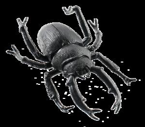 Black Beetle Transparent Images PNG PNG Clip art