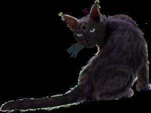 Black Cat PNG Clipart PNG Clip art