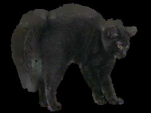 Black Cat PNG Image PNG Clip art