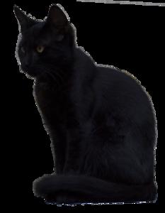 Black Cat PNG Picture PNG Clip art