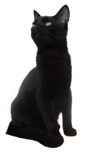 Black Cat PNG Transparent Picture PNG clipart