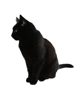 Black Cat Transparent Background PNG Clip art
