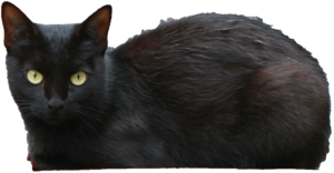 Black Cat Transparent PNG PNG Clip art