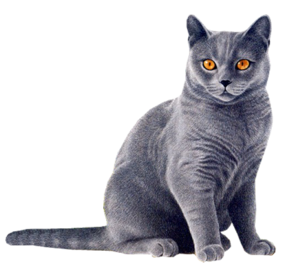 Black Cat Yellow Eyes PNG PNG Clip art