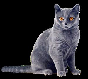 Black Cat Yellow Eyes PNG PNG Clip art