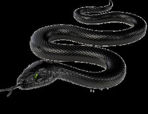 Black Mamba PNG HD PNG Clip art