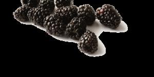 Black Raspberries PNG Free Download PNG Clip art