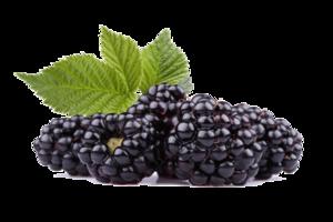 Black Raspberries PNG HD PNG Clip art