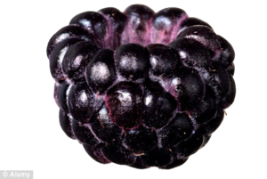 Black Raspberries Transparent PNG PNG icon