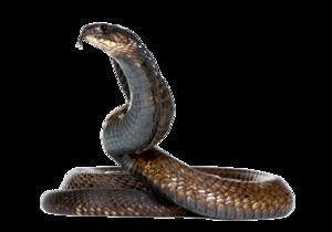 Black Snake PNG Image PNG Clip art