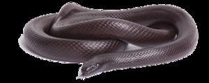 Black Snake PNG Photos PNG Clip art