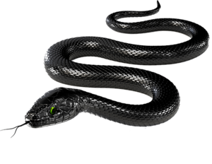 Black Snake PNG Transparent Image PNG Clip art