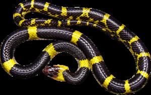 Black Snake Transparent PNG PNG Clip art