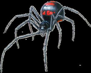 Black Widow Spider Transparent PNG PNG Clip art