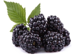 Blackberry Fruit PNG Free Download PNG Clip art