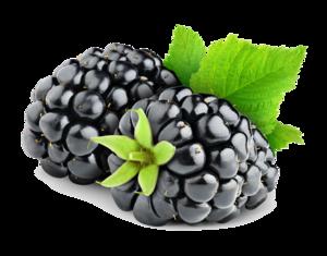 Blackberry Fruit PNG HD PNG Clip art