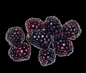 Blackberry Fruit PNG Image PNG Clip art