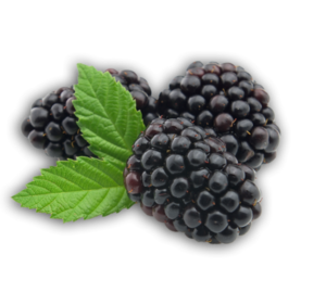 Blackberry Fruit PNG Picture PNG Clip art