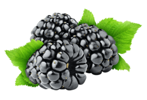 Blackberry Fruit Transparent Background PNG Clip art