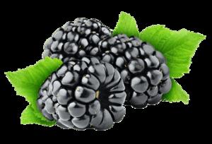 Blackberry Fruit Transparent Background PNG Clip art