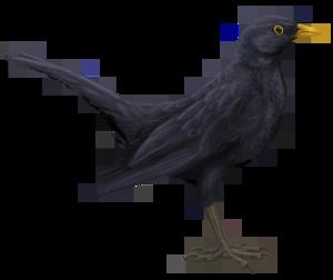 Blackbird PNG HD PNG Clip art