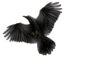Blackbird PNG Photo PNG Clip art