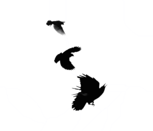 Blackbird Transparent Images PNG PNG Clip art
