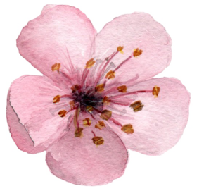 Blossom PNG Clipart Background PNG Clip art