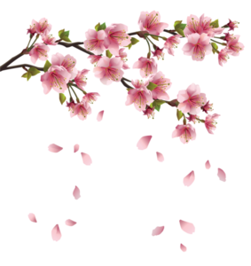Blossom PNG Free Image PNG Clip art